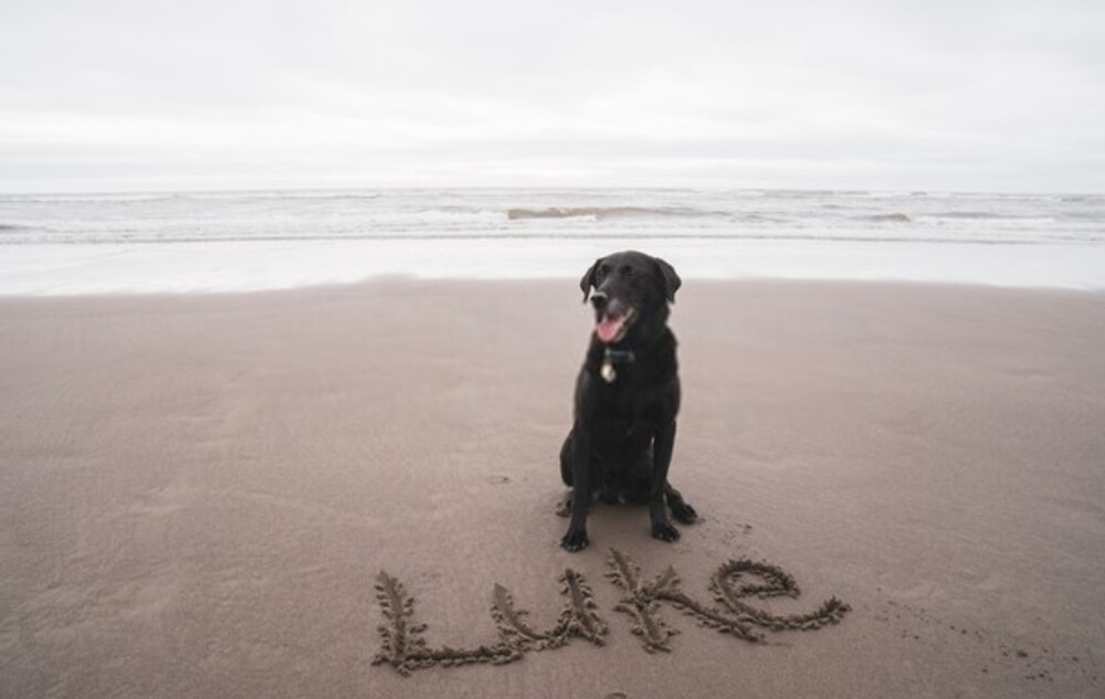 Dog on the beach with his name written in sand