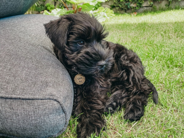 Dog supported by a pillow