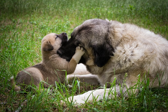 Puppie hugging his mom