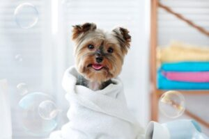 Always carefully pick your dog grooming products for safety reasons