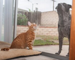 It's best to keep your cat and dog separated by something for a few days