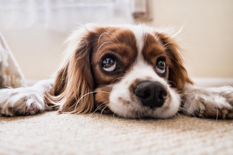 Clean dog lying down
