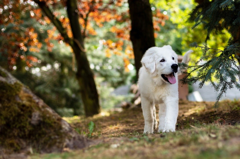 Clean puppy in a forest