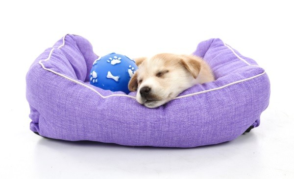 Adorable little dog that is laying comfortably in a small pet bed.