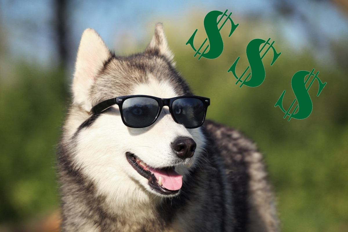 The costs for keeping a Siberian Husky dog on a monthly basis