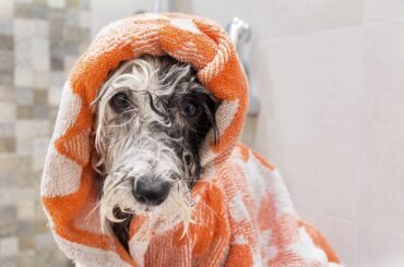 Lovely dog after a shampoo bath in a bathroom