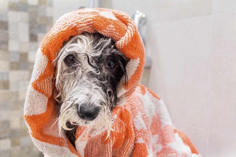 Lovely dog after a shampoo bath in a bathroom