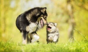 Dog running with a puppy