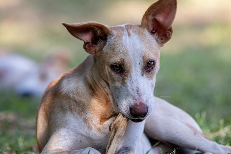 Dog chews a bone on the lawn