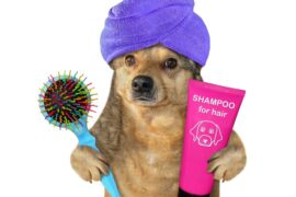 A ready for a bath dog holding a shampoo bottle in his paw