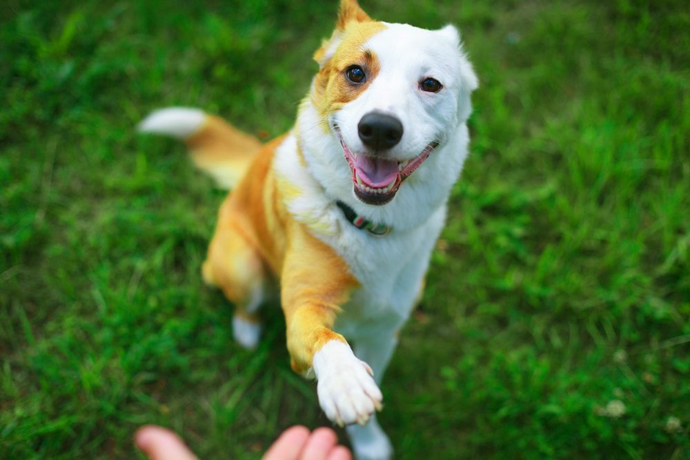 Happy dog paws and his pal hand meeting