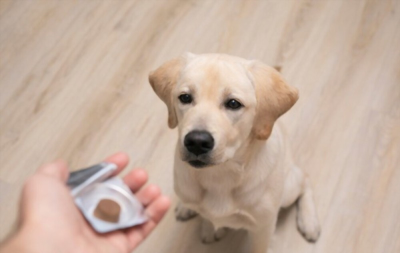 Dog taking flea treatment