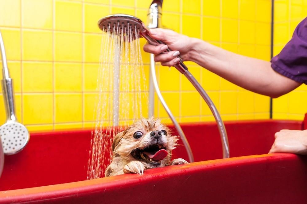 Applying dog washing solution on dog for benefit analysis