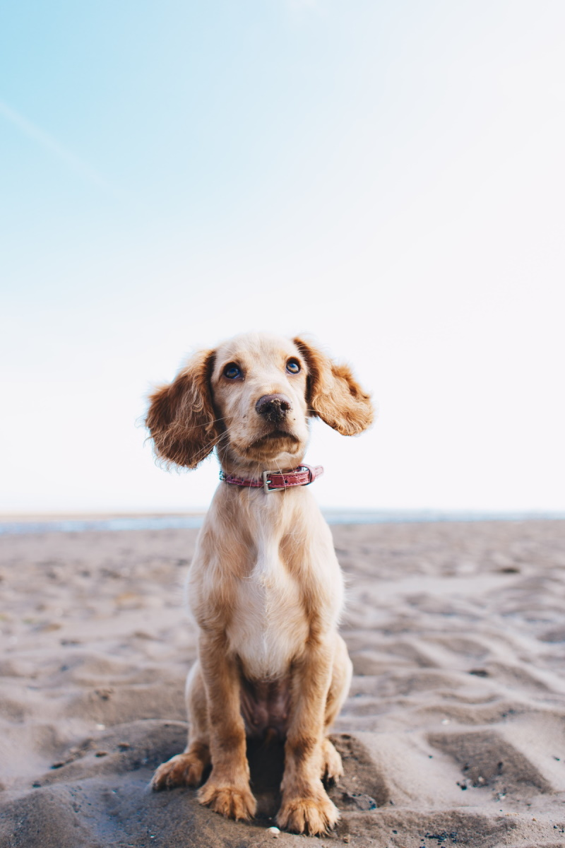 Dog with clipped nails