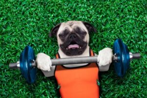 Dogs that exercise are more likely to eat their food