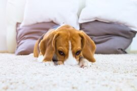 What to do if you are leaving a puppy alone at home for the first time simple advice.