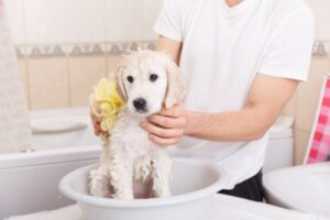 Owner washing his pooch with a sponge in the bathroom
