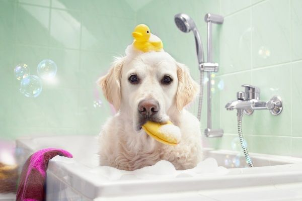 Dog happily being cleaned in a bathtub filled with pet toys.
