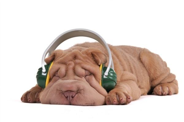 Sleeping doggy wearing noise cancelling headphones.