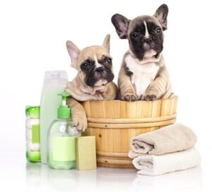Two cute little puppies ready for a good bath