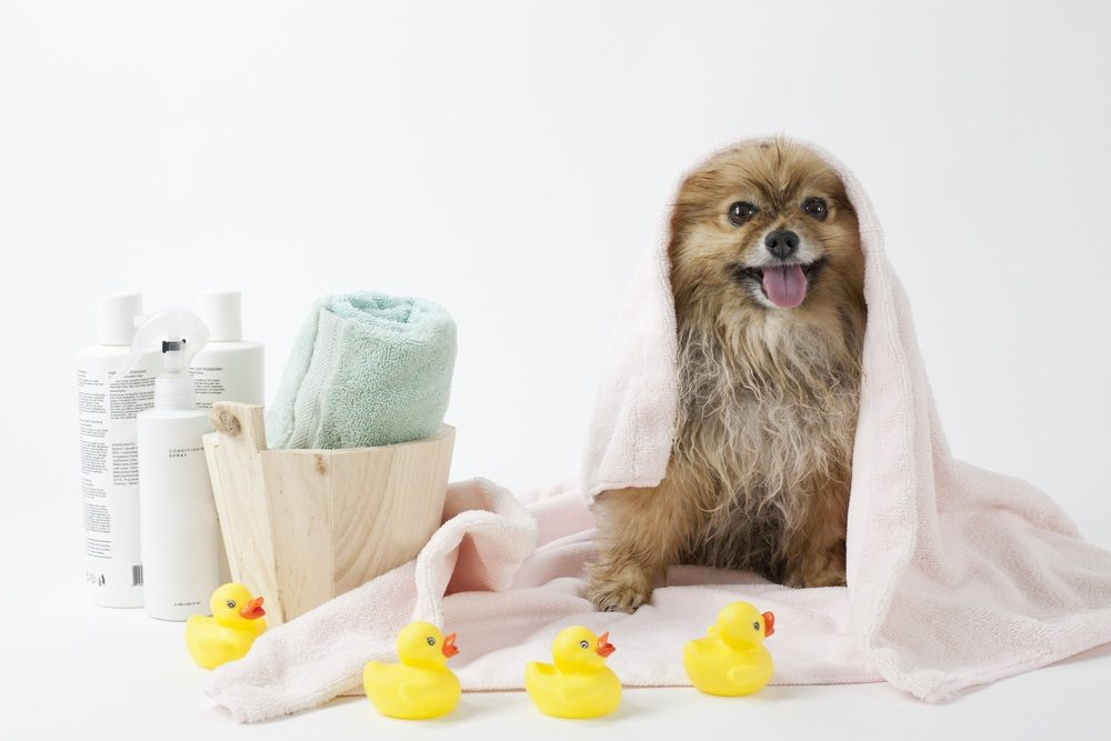 It is important to use the right dog products for grooming for safety reasons
